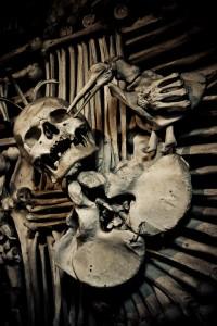 Bone Bird Picking Bones (Photo by Sterf)