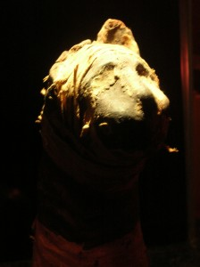mummified cat at ripley's st. augustine