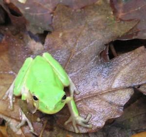 wino_frog
